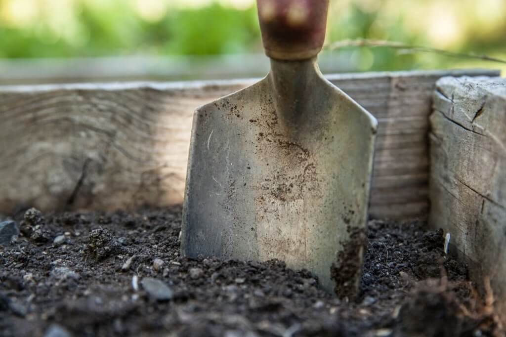 5 tips for the newbie gardener | cassierauk.com