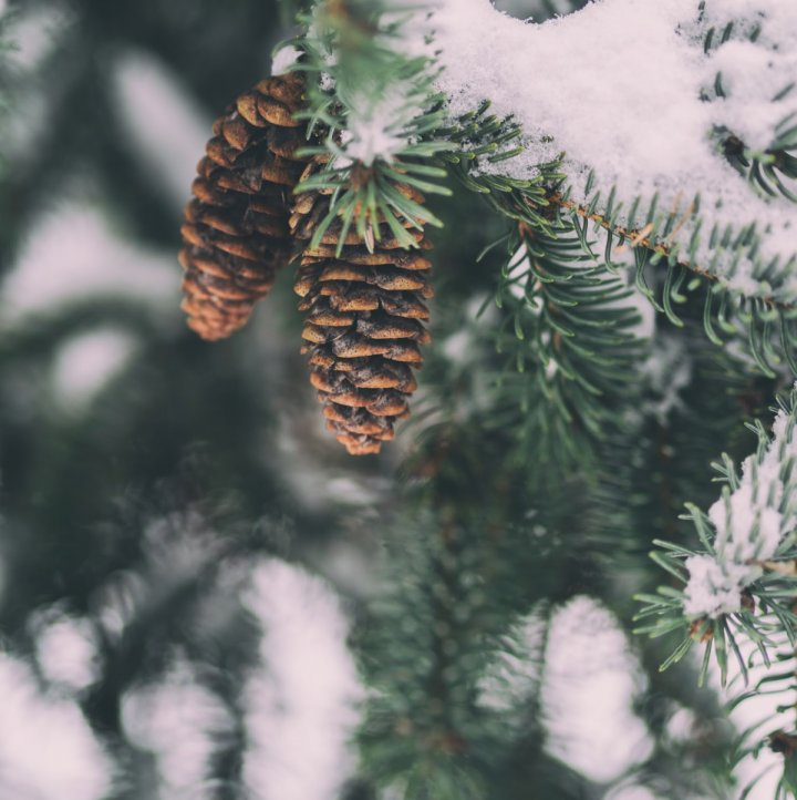 Five Free Things You Can Do Right Now to Prep For the Holidays | cassierauk.com